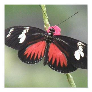 Butterfly Photo Design Invitation