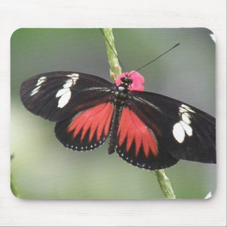 Butterfly Photo Design Mouse Pad