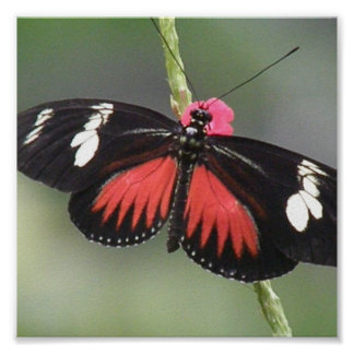 Butterfly Photo Design Print