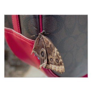 Butterfly Photo Poster