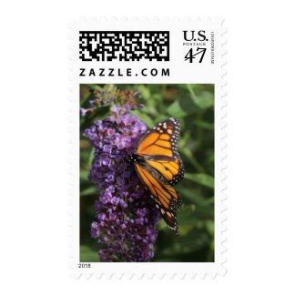 Butterfly photo stamp flower photo