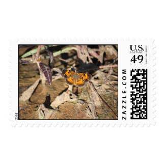 Butterfly Photography Stamp