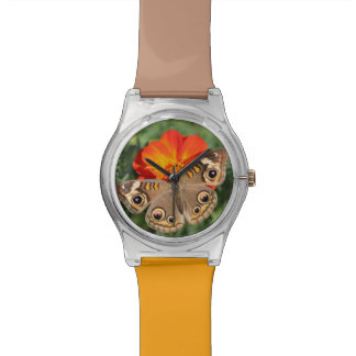 butterfly photography watch