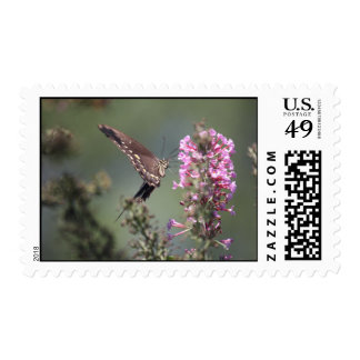 Butterfly Photograpy Stamps