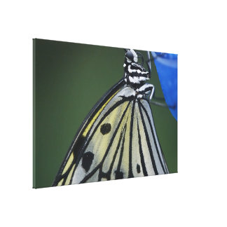 Butterfly Pic Stretched Canvas Prints