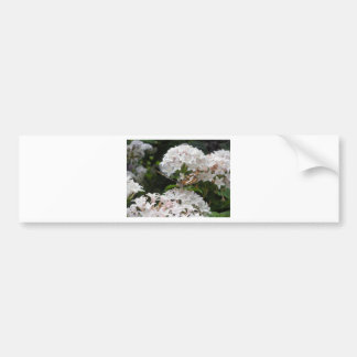 Butterfly Pictures Bumper Sticker