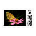 Butterfly & Pink Flower Postage Stamps