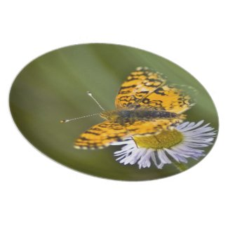 Butterfly Plate plate