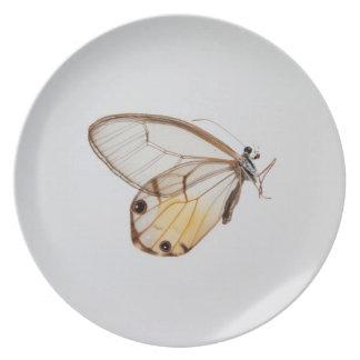 Butterfly plate # 1