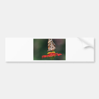 Butterfly pollinating flower bumper sticker