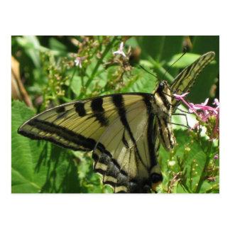 """ Butterfly Postacard ! "" Postcard"