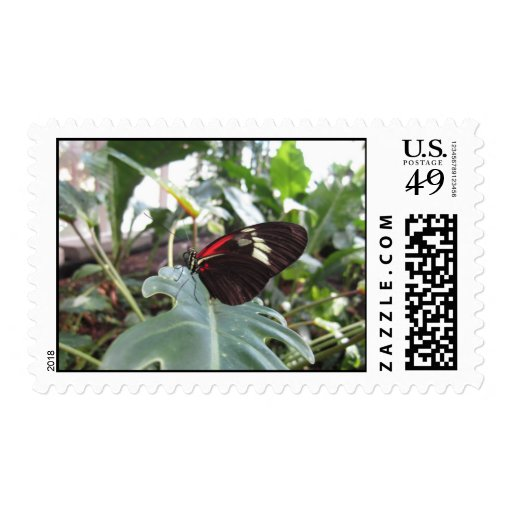 Butterfly! Postage