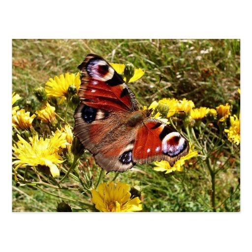 Butterfly Postal