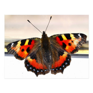 Butterfly. Postcard