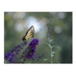 Butterfly Postcard Buddleia with Bokeh Beautiful
