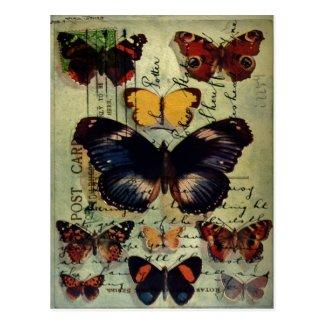 Butterfly Postcard Postcard