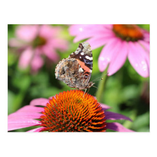 Butterfly postcard with cone flowers