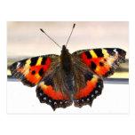 Butterfly. Postcards