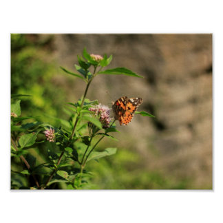 Butterfly poster / Poster con mariposa