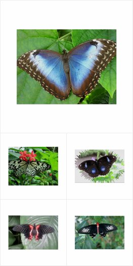 Butterfly Posters