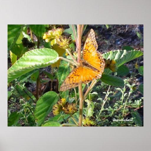 Butterfly pr1 poster