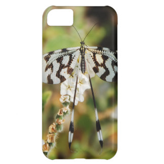 Butterfly Print iPhone 5C Covers