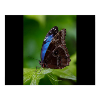 Butterfly Print Custom Personalize Anniversaries