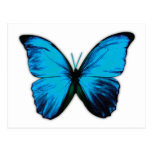 Butterfly Print Post Card