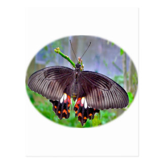 Butterfly Products to Dazzle Postcard