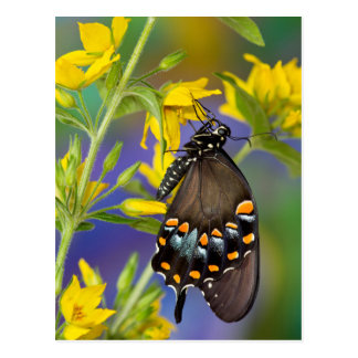 Butterfly profile on yellow flower postcard
