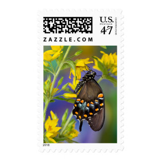 Butterfly profile on yellow flower stamp