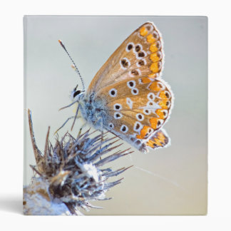 Butterfly putting on bluish pointed leaves 3 ring binder