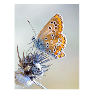 Butterfly putting on bluish pointed leaves postcard