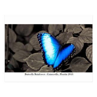 Butterfly Rainforest - Gainesville, FL 002 Postcard
