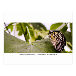 Butterfly Rainforest - Gainesville, FL 005 Postcard