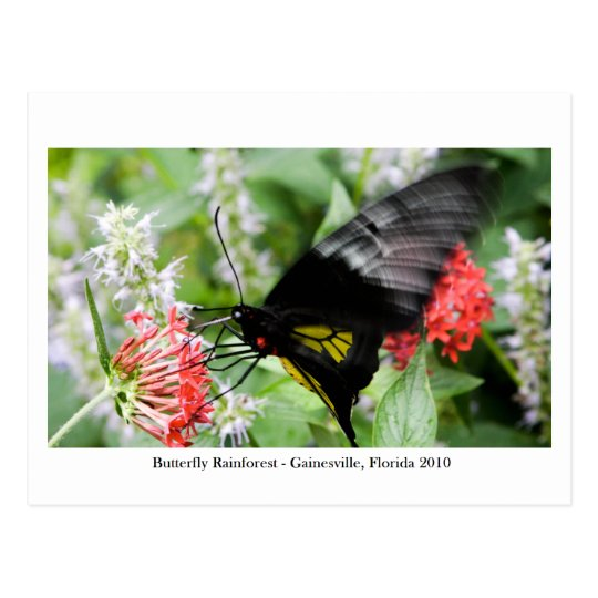 Butterfly Rainforest - Gainesville, FL 006 Postcard