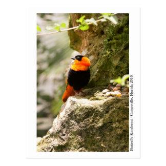 Butterfly Rainforest - Gainesville, FL 009 Postcard