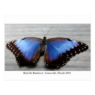 Butterfly Rainforest - Gainesville, FL 010 Postcard