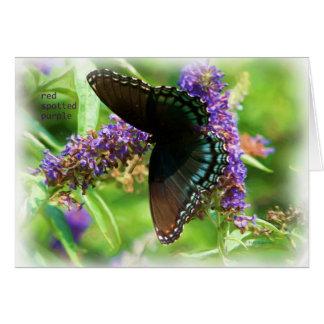 butterfly_red_spotted_purple_0233_Paint Tarjeta De Felicitación