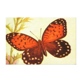 BUTTERFLY - REGAL FRITILLARY STRETCHED CANVAS PRINT