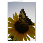 Butterfly Resting at Dusk Greeting Cards