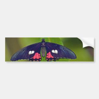 Butterfly Resting Bumper Sticker