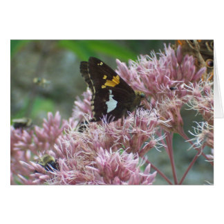 Butterfly resting card