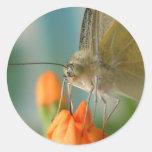 Butterfly Round Sticker