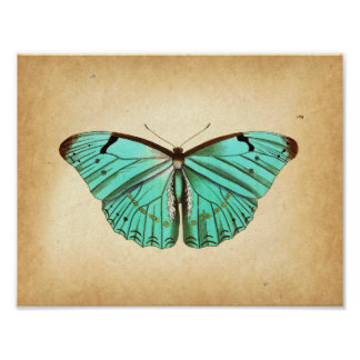 Butterfly Scientific Illustration Jesus Fish Tattoo Behind Ear
