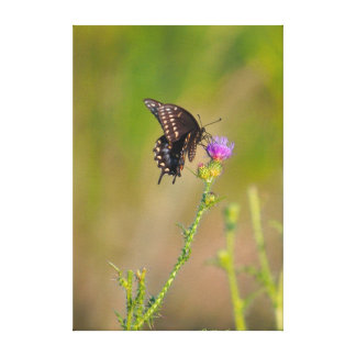 Butterfly Scottish Thistle Garden Scene Gallery Wrapped Canvas