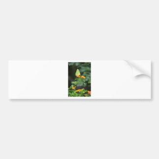 Butterfly Series by LellO Bumper Sticker