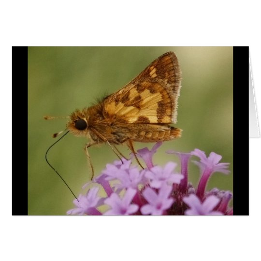 Butterfly Sipping Card