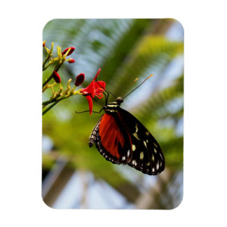 Butterfly Sips Photo Magnet