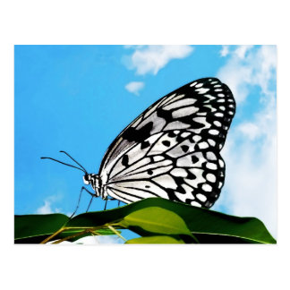 Butterfly & Sky Postcard